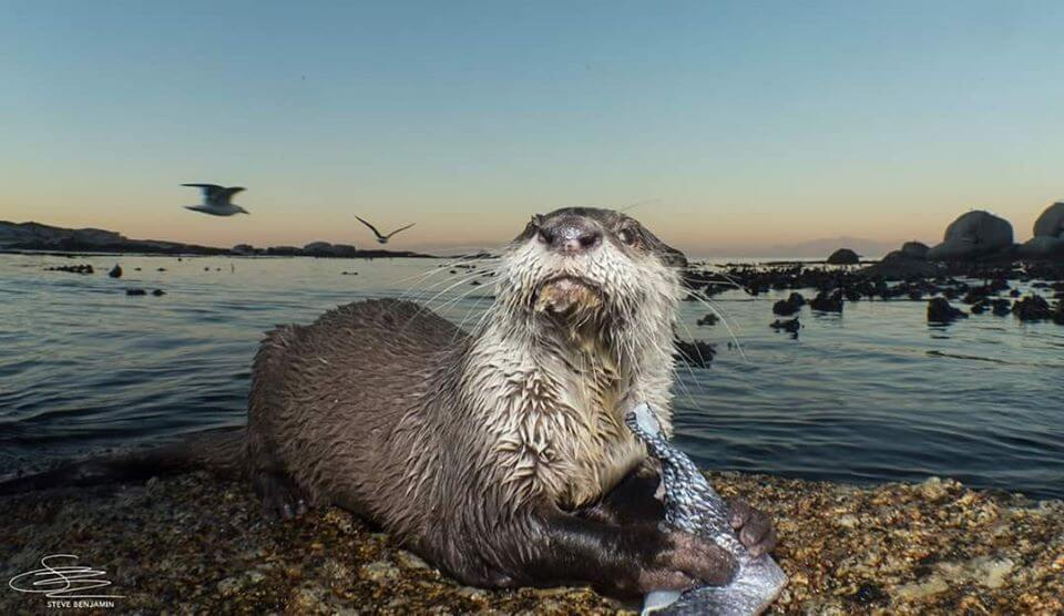things to do in simonstown cape town otters