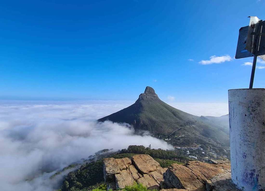 What Are The Best Things To Do in Cape Town Lions head