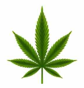 Agency Checklists, MA Insurance News, Mass. Insurance News, MA Marijuana Insurance Regulations, Insurance requirements for Marijuana in Mass.