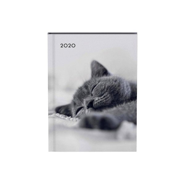 Agenda 2020 Lannoo My favourite friends cat grijs