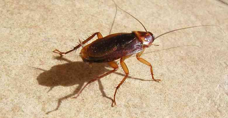 voici comment viter les mouches et insectes chez soi. Black Bedroom Furniture Sets. Home Design Ideas