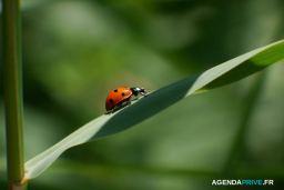 Ventes Vertes : La Vente Privée écolo, éthique Et Bio