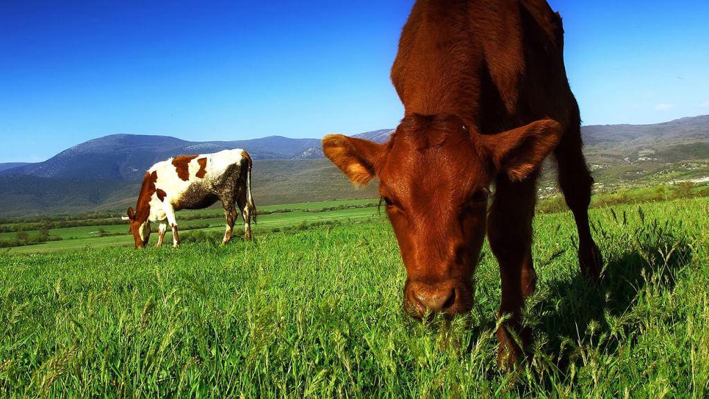 Consumir carne contamina al medio ambiente más de lo que te imaginas