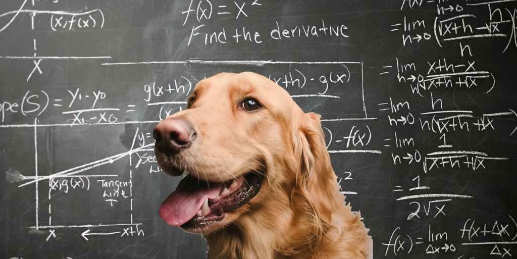 Investigación revela que la resistencia del perro a enfermedades priónicas ayudaría a crear nuevas terapias