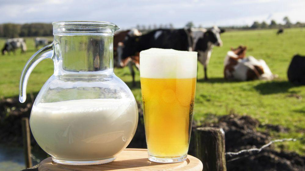 ¡Con la cerveza no! Las vacas y los productores sufren por el cierre de la industria cervecera