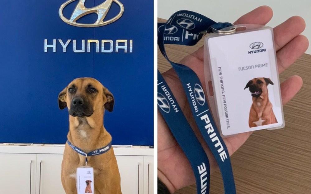 Viral: Agencia de autos adopta y emplea a Tucson Prime, un perrito callejero