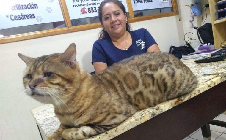 Mascotas: rescatan enorme gato que fue confundido con un leopardo