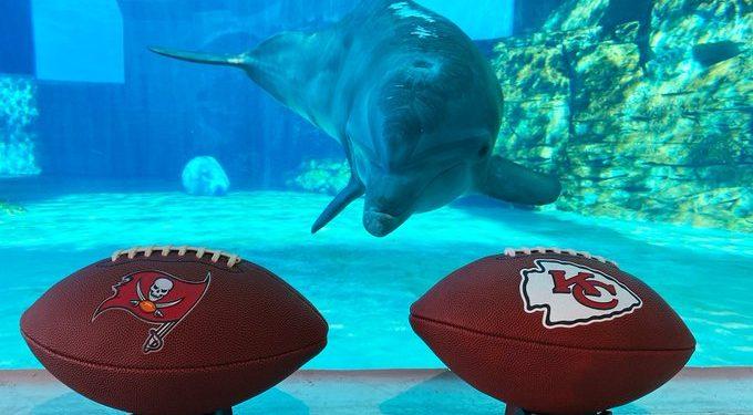 Nicholas, el delfín oráculo ya pronosticó quien ganará Super Bowl LV