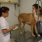 La Municipalidad brindará el servicio gratuito de castración de mascotas en Villa 9 de Julio