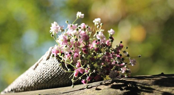 bag-gypsofilia-seeds-1716655_1280