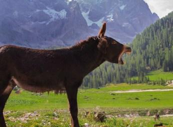 donkey-2926641_1280