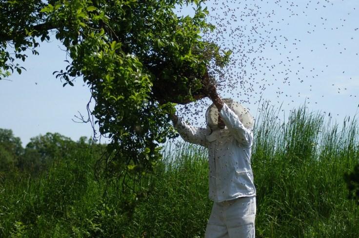 hive-1094857_1920