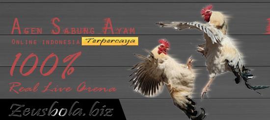 Agen Judi Sabung Ayam Online Terpercaya Di Indonesia