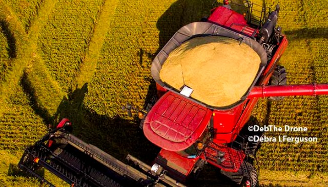 Rice: Mexico Broadens Choice of Rice Suppliers to Diversify Trade