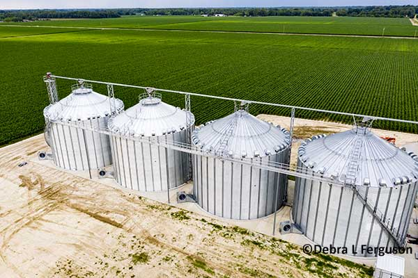 DTN Grain Open: Prices Consolidate Ahead of WASDE – AgFax