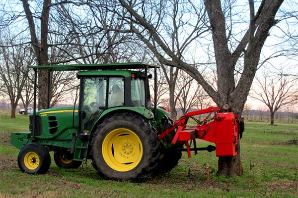 Oklahoma Pecan Prices: Harvest Off to Slow Start – AgFax