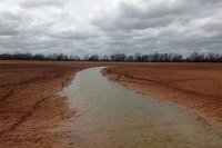 Wet or flooded fields like this one in Burleson County were preventing farmers from planting corn, according to Dr. Ronnie Schnell, Texas A&M AgriLife Extension Service state cropping systems specialist, College Station. (Texas A&M AgriLife Extension Service photo by Dr. Ronnie Schnell)