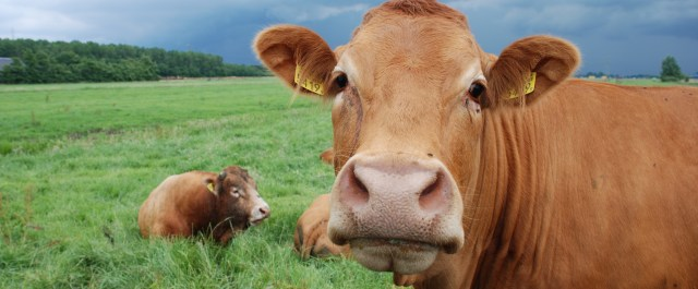 Fundings in Brief: Japan's Farmnote Raises Seed Capital and Indian Animal Healthcare Companies Merge