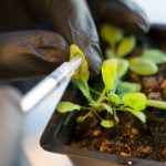 Syngenta and DSM Enter into Ag Biologicals Partnership