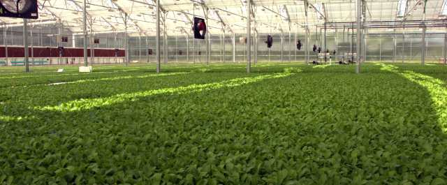 Earth Equity Farms nabs seed round