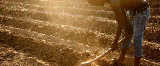 iProcure, an Online B2B Platform Improving Farming Inputs Access in Kenya, Raises Venture Capital