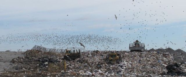 Making Dirty Clean: Scientists Use Landfill Byproducts for Hydrogen Fuel