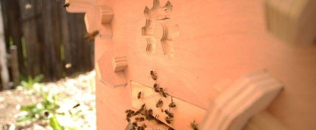 Innovators Crowdfund $63K for Smart Beehive Sensors