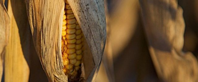 Some Ethanol Emits More CO2 than Gasoline, Study Says