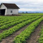$50M AgTech Innovation Fund to Come Out of Davis, CA