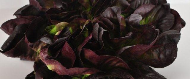 Panasonic is Growing Veggies in Singapore's First Licensed Indoor Farm