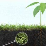 Flagship VentureLabs' unveils microbial biostimulant company: Symbiota
