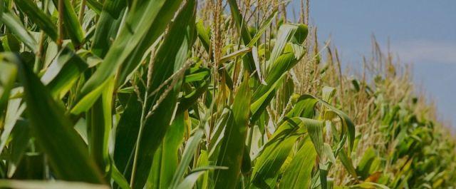 mission-slide-corn