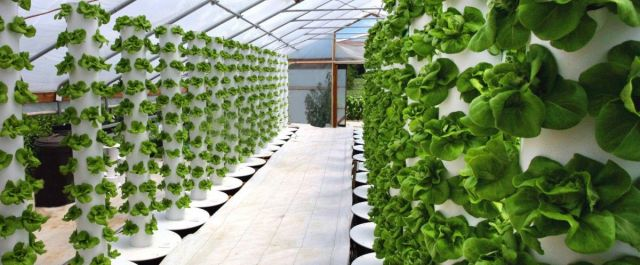 3 Big Challenges for Indoor Agriculture