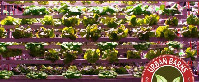 Urban Barns' Cubic Farming Seeks to Change the Future of Urban Farming one Head of Lettuce at a Time
