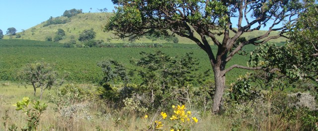 The State of New Mexico Announces $75M Investment in Brazilian Agriculture