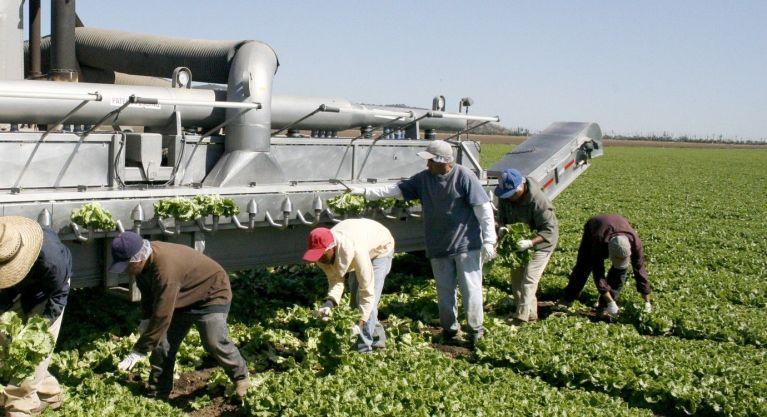 Western Growers raises agtech fund
