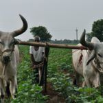 Aspada Invests $3.3M in Indian Farming-as-a-Service (FAAS) Provider EM3 AgriServices