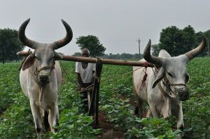 smallholder farmers india
