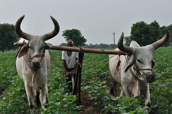 smallholder farmers india