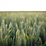 European Investment Bank Focuses in on Agri Innovation with FAO Agreement