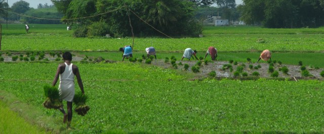 01AgriculturalFieldworks&Kanchipuram&TN