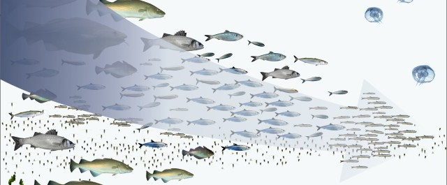 Fish 2.0: Bridging the Gap Between Investors and Aquaculture