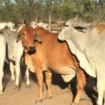 How To Invest in Farmland: A New Approach to Investing in Australian Land and Livestock