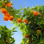 Australian Investment Firm Targets Growing Asian Demand for Fresh Fruit with $10m Fund