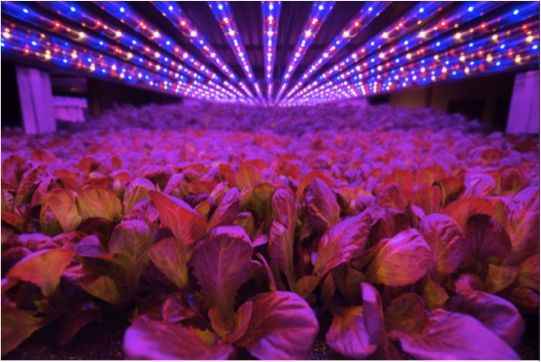 How to Invest in Leafy-Green Indoor Agriculture - AgFunderNews