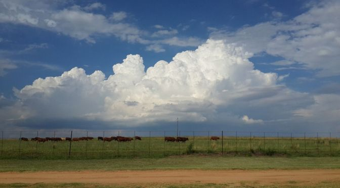 Two TV Networks Join Agriculture Information Drive with the Farm & Ranch Forecast
