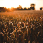 Monsanto Growth Ventures to Close First Portfolio of Agtech Investments – exclusive