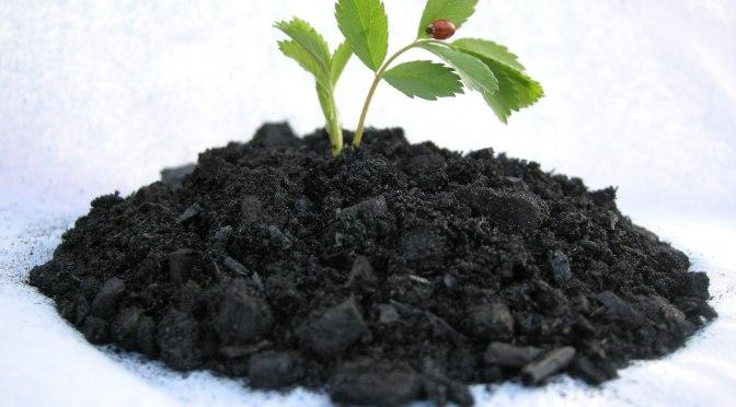 Cool Planet Raises $9m to Commercialize Co2 Sequestering Biocarbon Soil Input