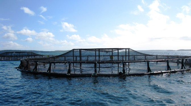 Private Equity Firm Amerra Invests in European Aquaculture Company as Investors Take Note of Sector