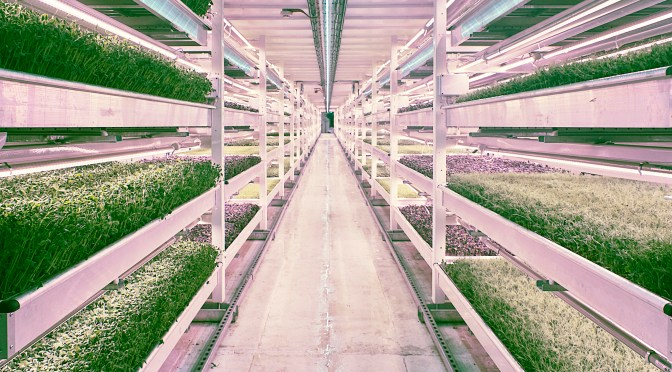 Association For Vertical Farming To Reveal Sustainability